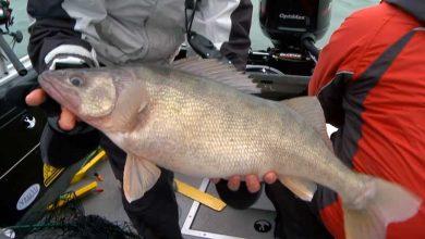 National Walleye Tour - Fishing TV
